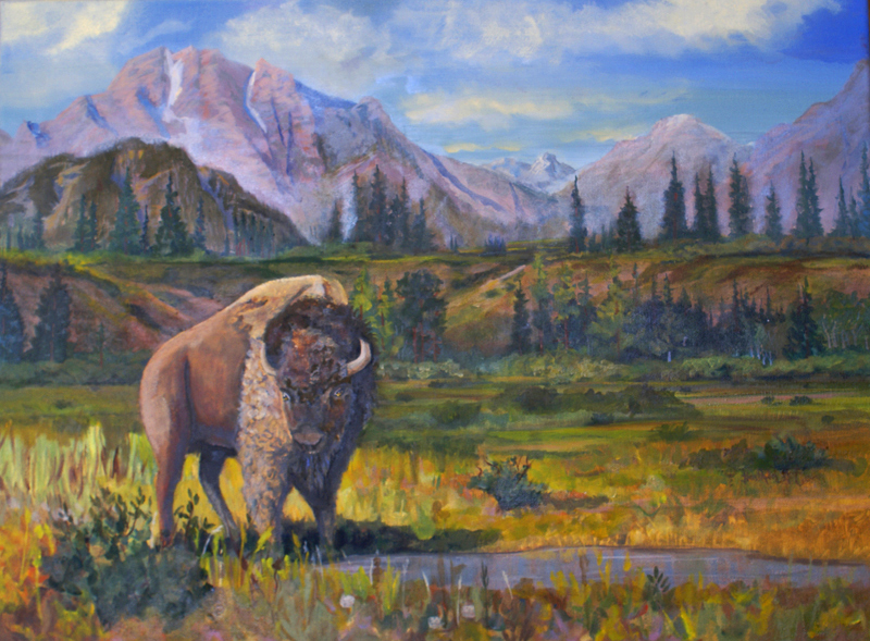 Buffalo still roam in the Grand Tetons